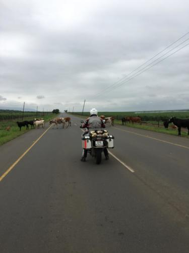 Motorradtour-Küstentour-Südafrika035